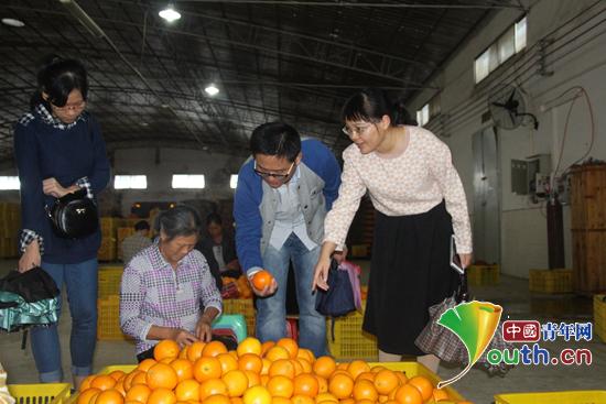 广西大学研究生支教团走进富川县水果公司参观蜜橘的浮选,包装过程.图片
