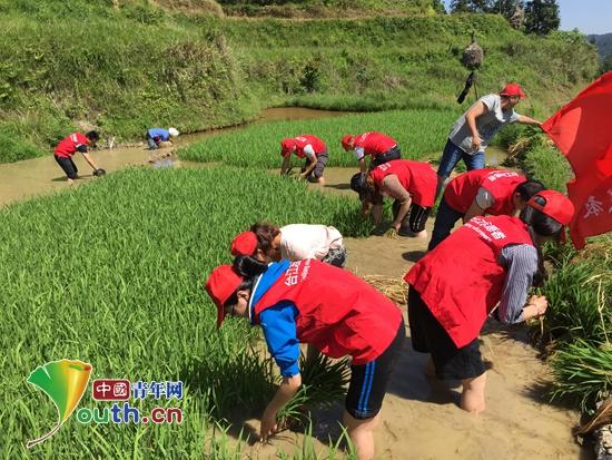 2017年5月,东北林业大学研支团贵州分队成员帮助空巢老人插秧。东北林大研支团 供图