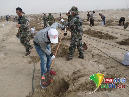 新疆麦盖提县志愿者参加植树活动为沙漠添绿