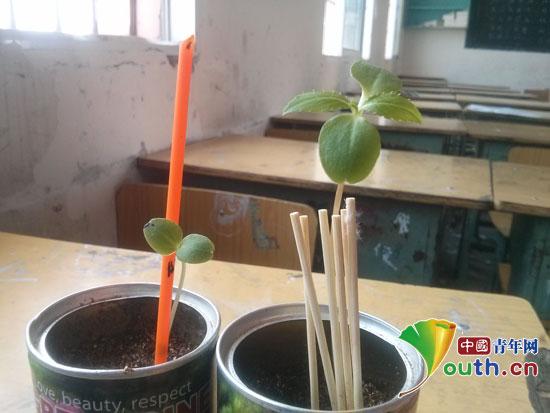 黑龙江大学支教团开展实践教学体验植物生长